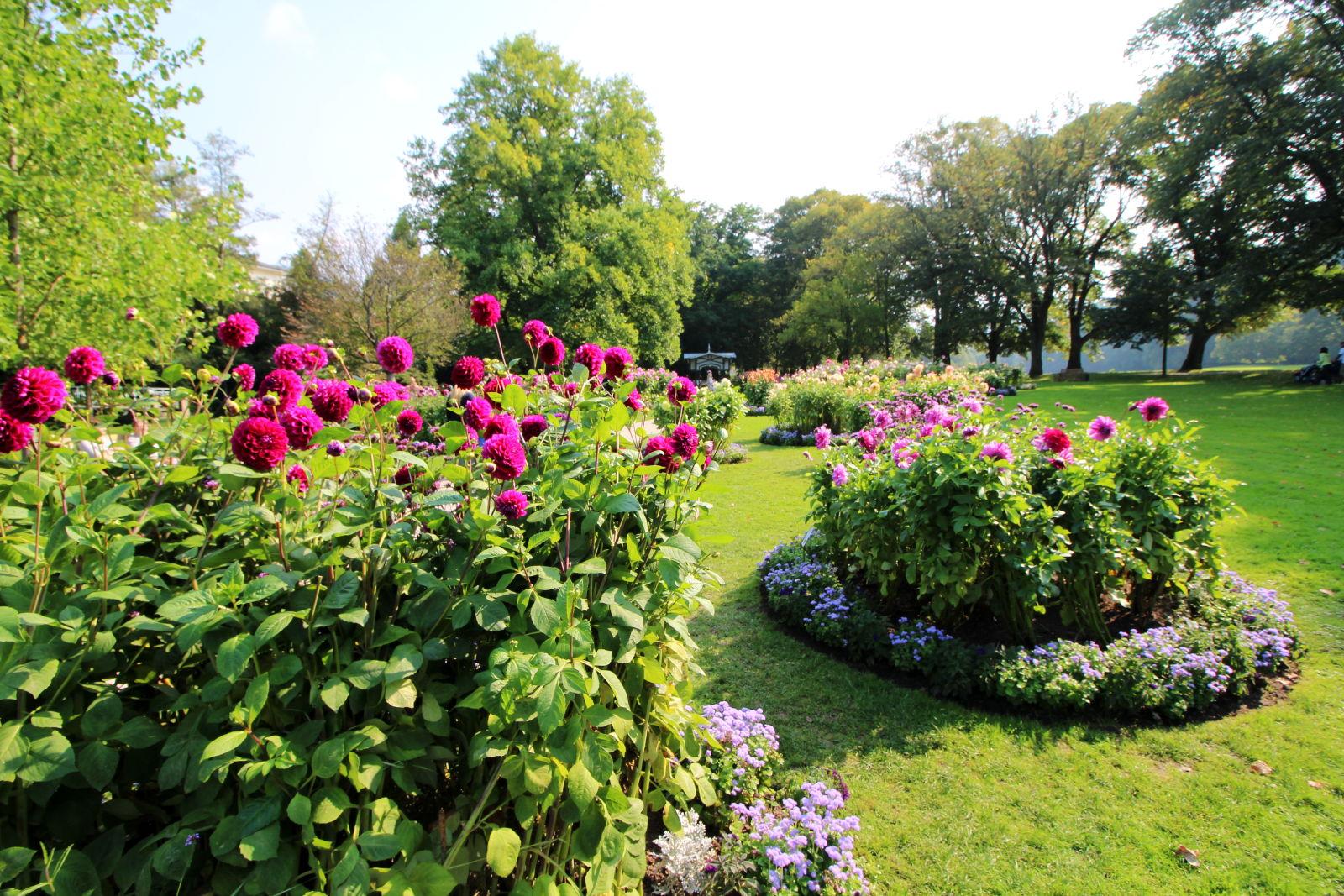 Der Dahliengarten in Baden-Baden