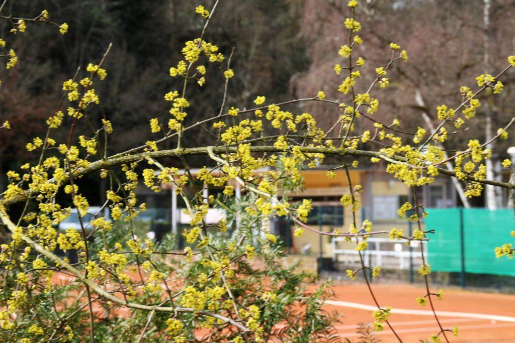 Tennisplatz Lichtentaler Allee