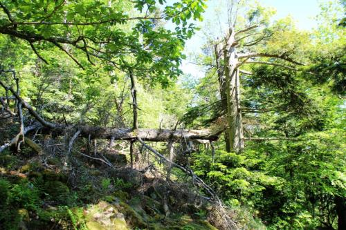 Bannwald am Battert
