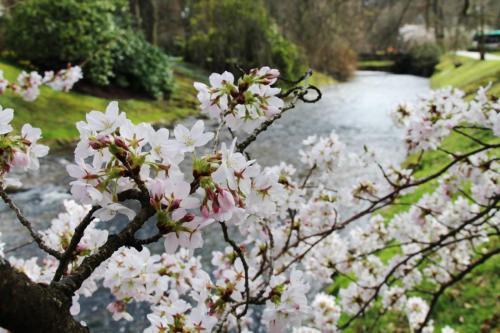 Frühling an der Oos in Baden-Baden