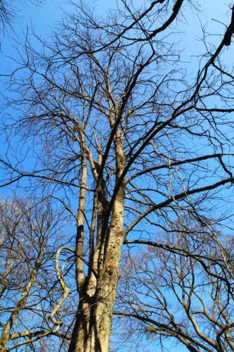 Winterlicher Baum in der Lichtentaler Allee
